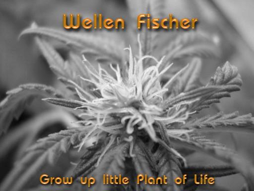 Wellen Fischer - Grow up little Plant of Life (Bonus Additional for Radio)